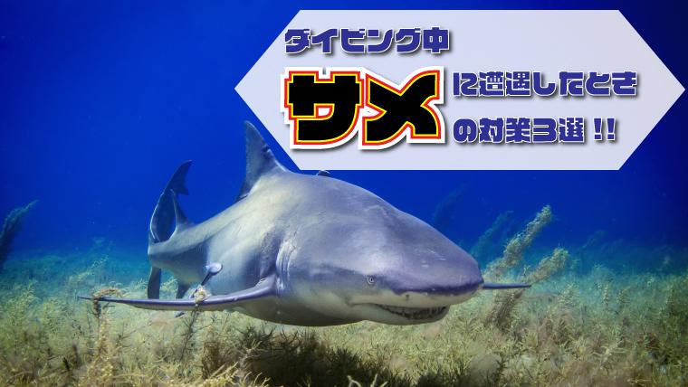 ダイビング中サメに遭遇した時の対策3選