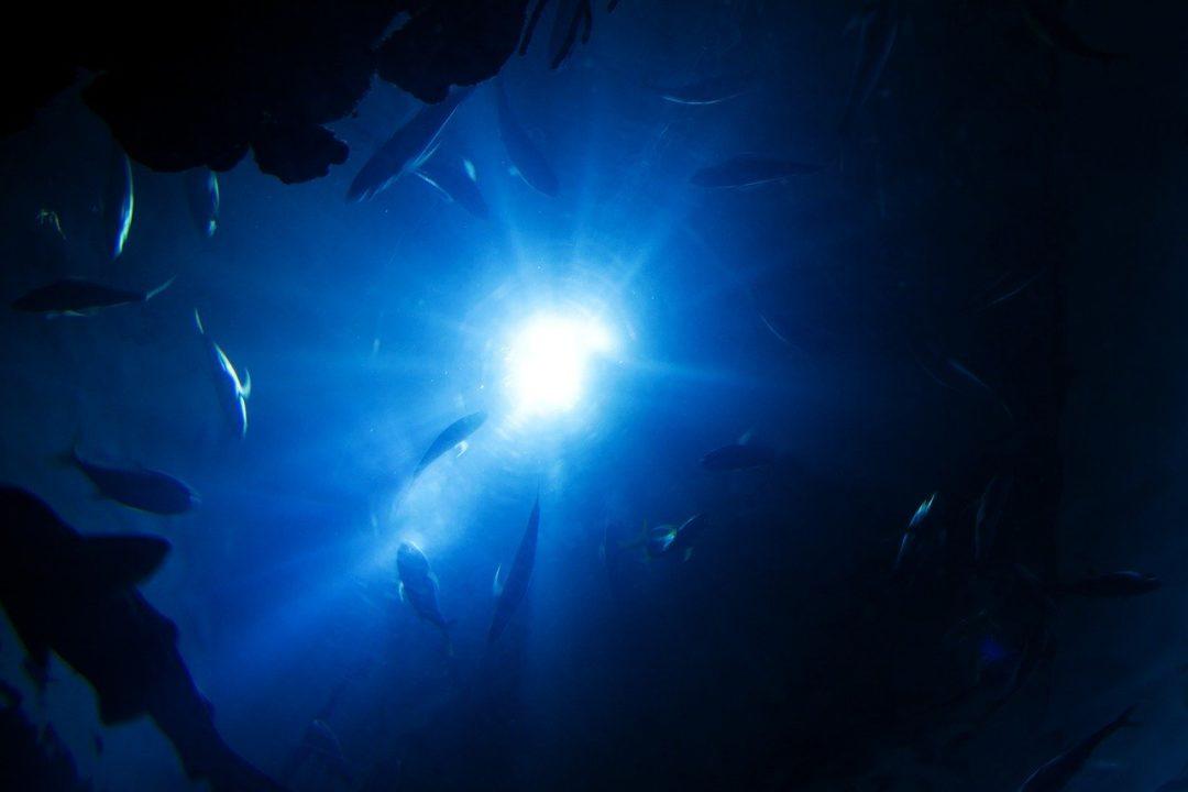 Diving, Light